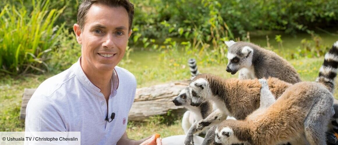 Le Zoo De Thoiry - Une Vie De Bêtes - Télé-Loisirs avec Zoo De Thoiry Avis